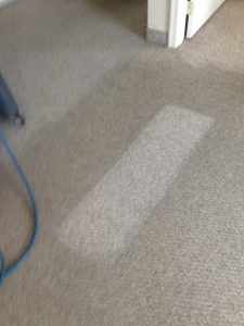 Carpet Cleaning Services In South Jersey Ideas